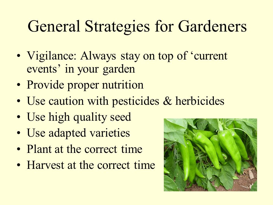 General Strategies for Gardeners Vigilance: Always stay on top of 'current events' in your garden Provide proper nutrition Use caution with pesticides & herbicides Use high quality seed Use adapted varieties Plant at the correct time Harvest at the correct time