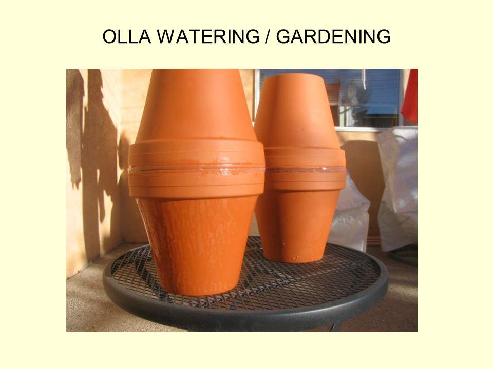 OLLA WATERING / GARDENING
