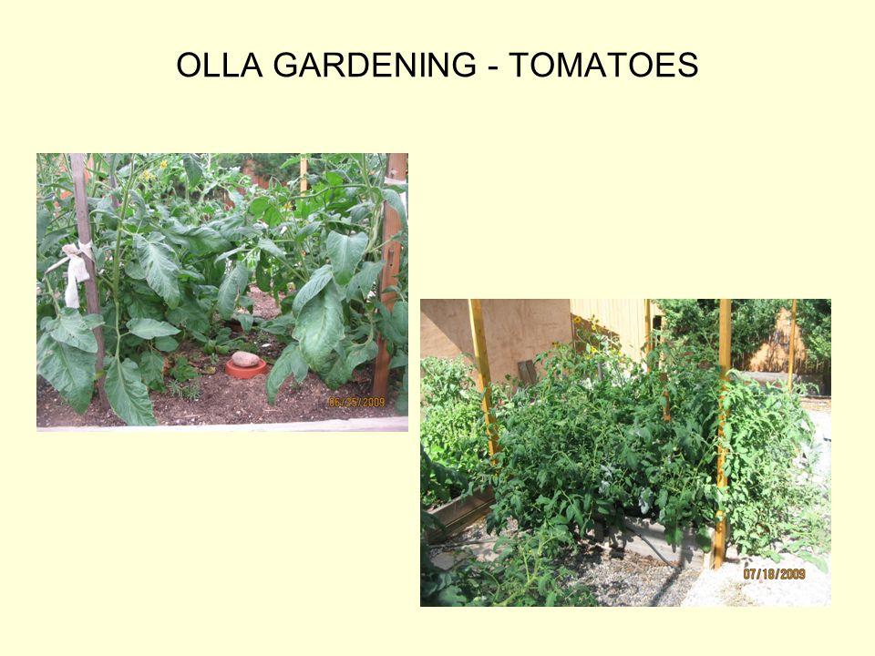 OLLA GARDENING - TOMATOES