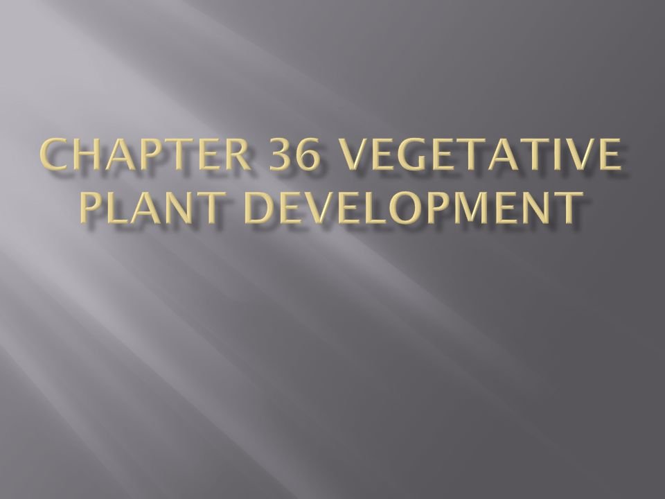 Seeds are important adaptively in 4 ways:  Seeds maintain dormancy under unfavorable conditions and postpone development until better conditions arise  Seeds afford maximum protection to the young plant at its most vulnerable stage of development  Seeds contain stored food that permits a young plant to develop before photosynthetic activity begins  Seeds are adapted for dispersal, facilitating the migration of plant genotypes into new habitats