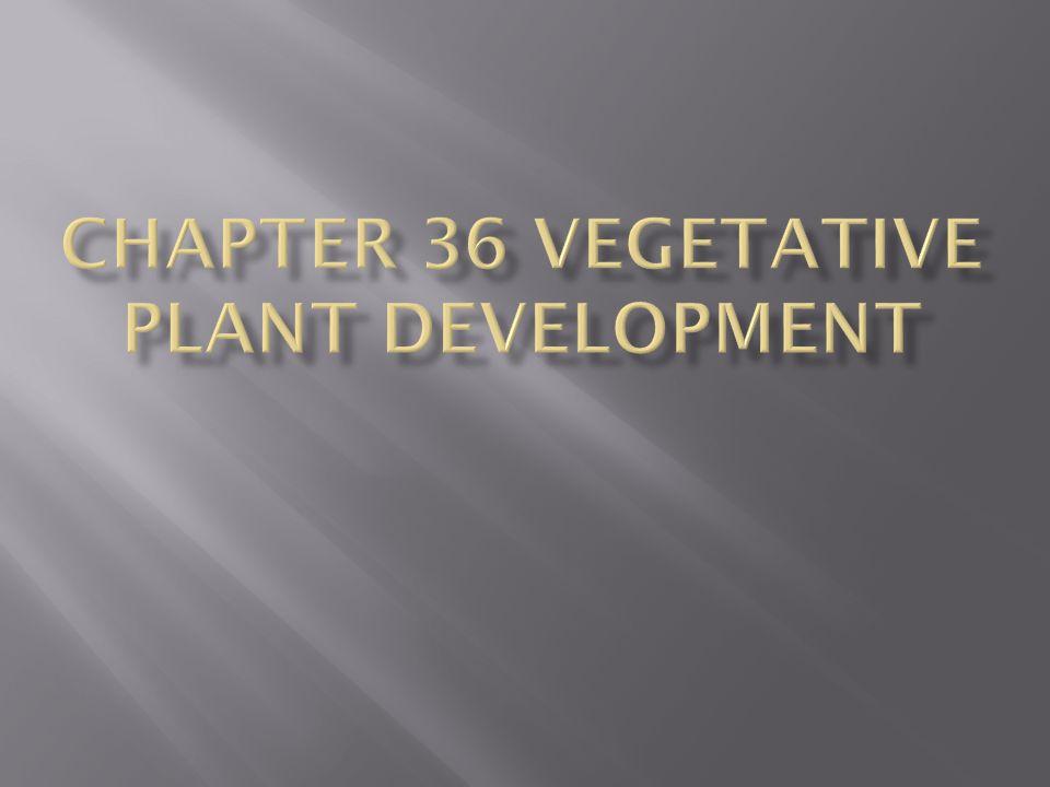 Plant Embryo Development Establishes a Basic Body Plan