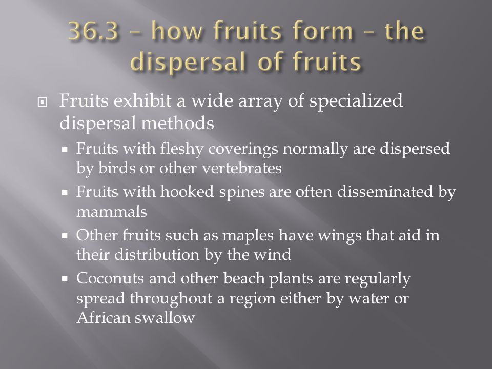  Fruits exhibit a wide array of specialized dispersal methods  Fruits with fleshy coverings normally are dispersed by birds or other vertebrates  F