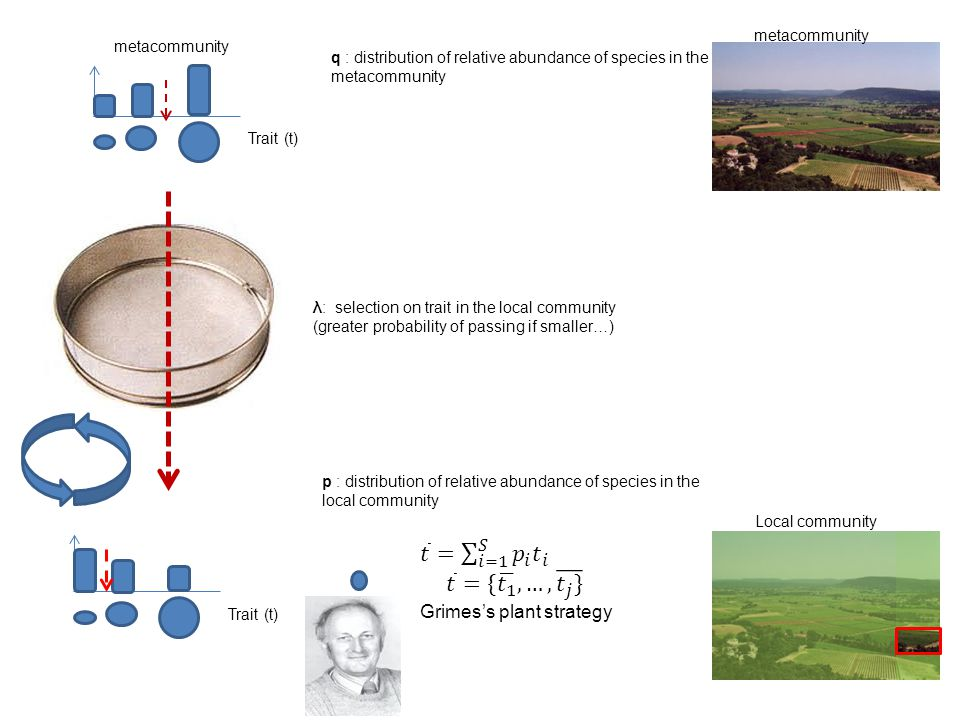 Measuring abundances Abundance of plant species can be measured as - numbers of stems - biomass or indirect measures of this (cover, dbh …) Units of observation are ambiguous - numbers of what.