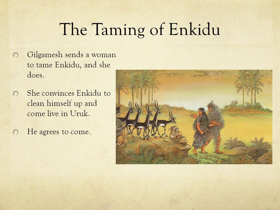 The Taming of Enkidu Gilgamesh sends a woman to tame Enkidu, and she does.