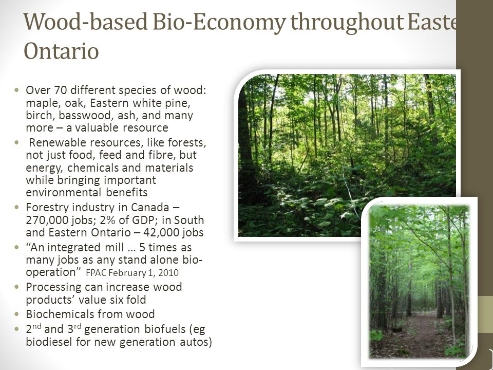 Wood-based Bio-Economy throughout Eastern Ontario Over 70 different species of wood: maple, oak, Eastern white pine, birch, basswood, ash, and many more – a valuable resource Renewable resources, like forests, not just food, feed and fibre, but energy, chemicals and materials while bringing important environmental benefits Forestry industry in Canada – 270,000 jobs; 2% of GDP; in South and Eastern Ontario – 42,000 jobs An integrated mill … 5 times as many jobs as any stand alone bio- operation FPAC February 1, 2010 Processing can increase wood products' value six fold Biochemicals from wood 2 nd and 3 rd generation biofuels (eg biodiesel for new generation autos) 5