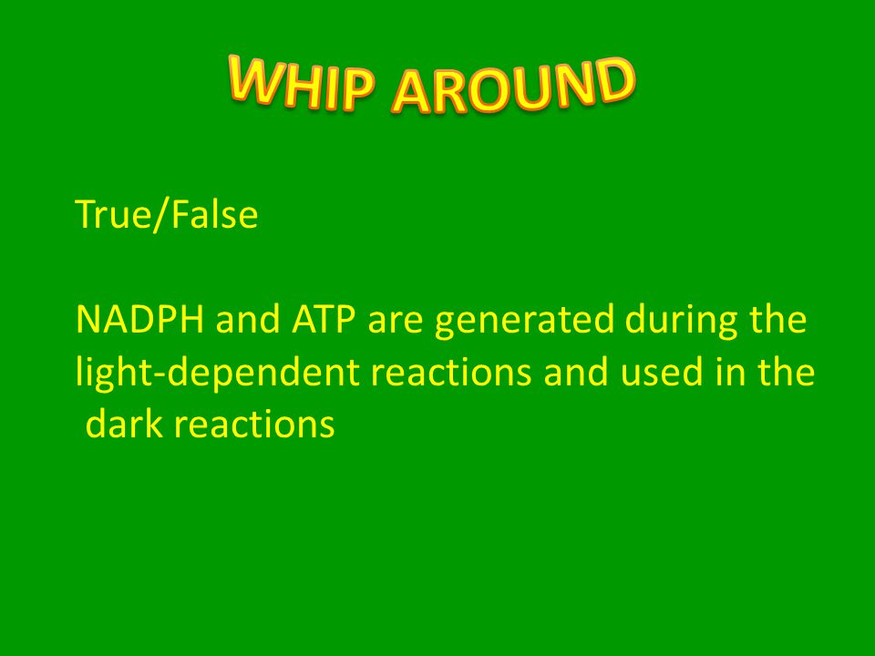 True/False NADPH and ATP are generated during the light-dependent reactions and used in the dark reactions