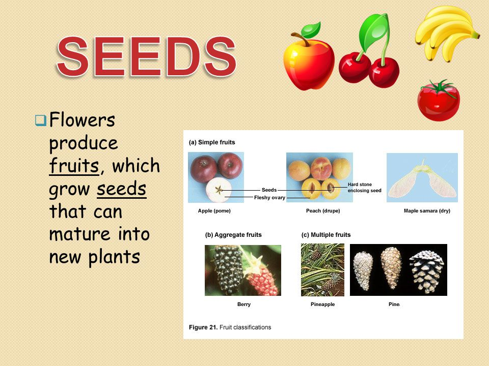  Flowers produce fruits, which grow seeds that can mature into new plants