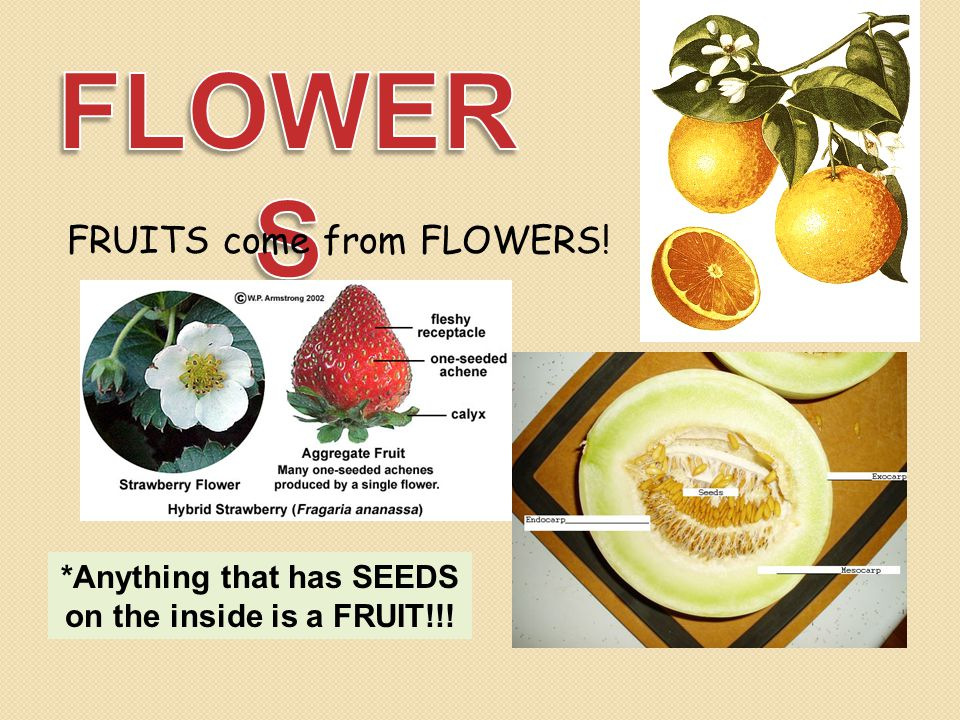 FRUITS come from FLOWERS! *Anything that has SEEDS on the inside is a FRUIT!!!