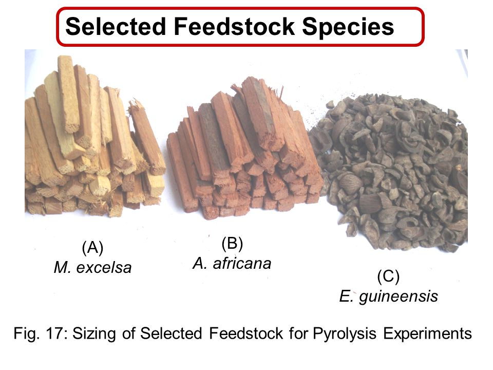 Selected Feedstock Species 70 (B) A. africana (A) M. excelsa Fig. 17: Sizing of Selected Feedstock for Pyrolysis Experiments (C) E. guineensis