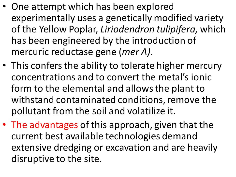 One attempt which has been explored experimentally uses a genetically modified variety of the Yellow Poplar, Liriodendron tulipifera, which has been engineered by the introduction of mercuric reductase gene (mer A).