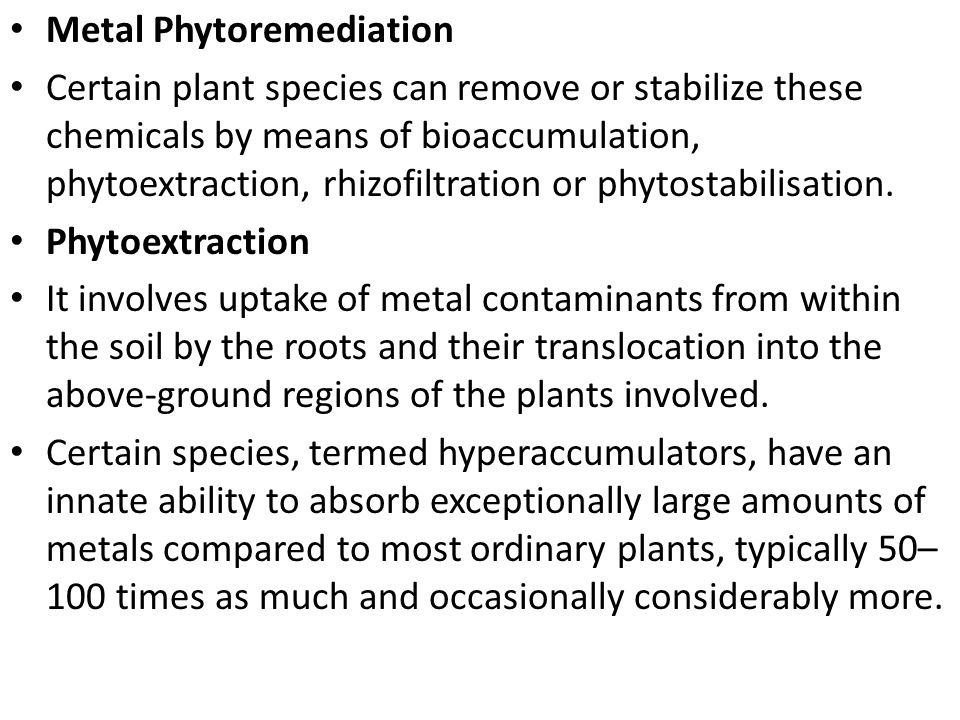 Metal Phytoremediation Certain plant species can remove or stabilize these chemicals by means of bioaccumulation, phytoextraction, rhizofiltration or