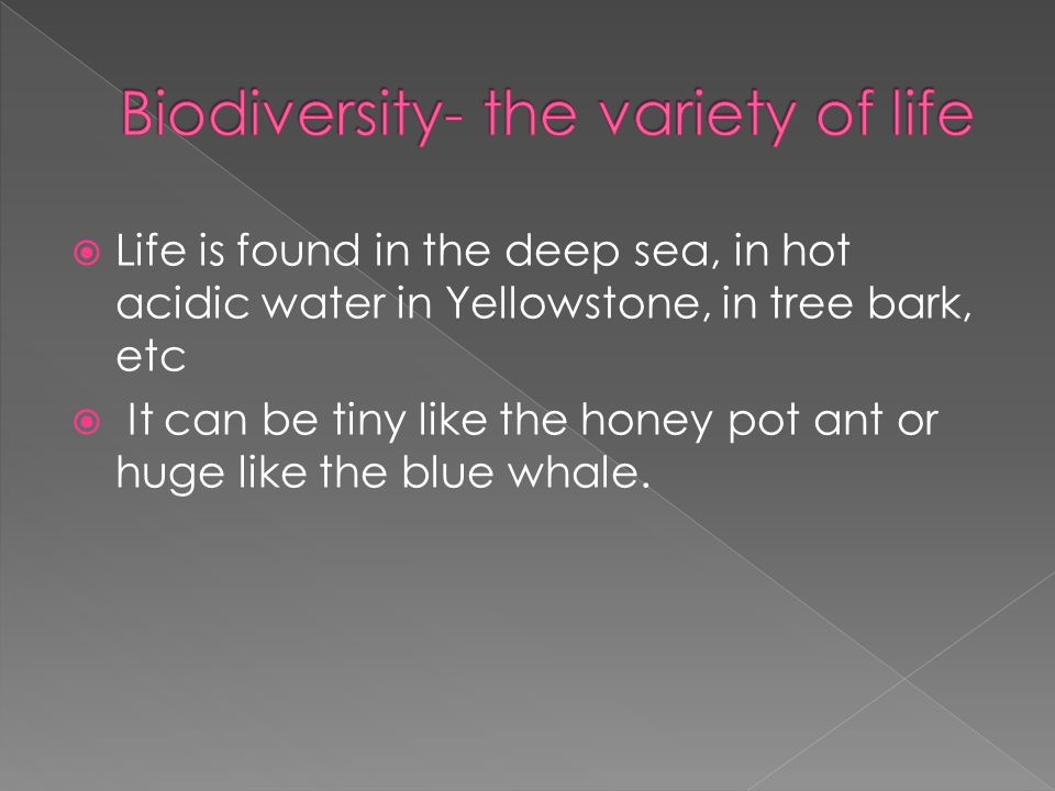  Life is found in the deep sea, in hot acidic water in Yellowstone, in tree bark, etc  It can be tiny like the honey pot ant or huge like the blue whale.