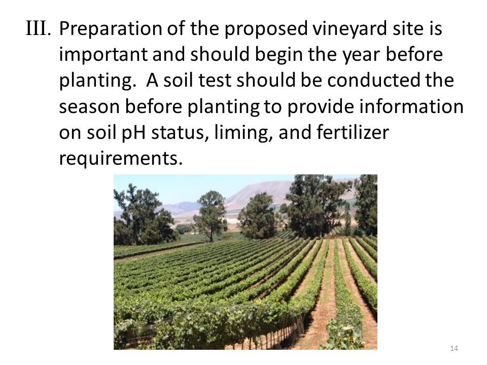 III. Preparation of the proposed vineyard site is important and should begin the year before planting. A soil test should be conducted the season befo