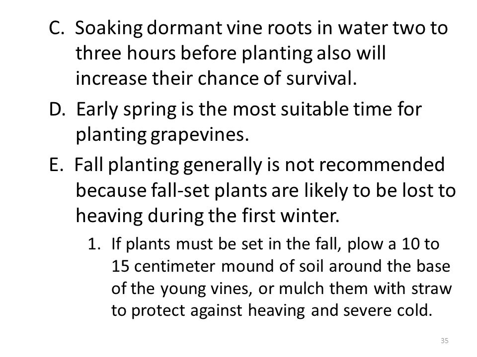 C. Soaking dormant vine roots in water two to three hours before planting also will increase their chance of survival. D. Early spring is the most sui
