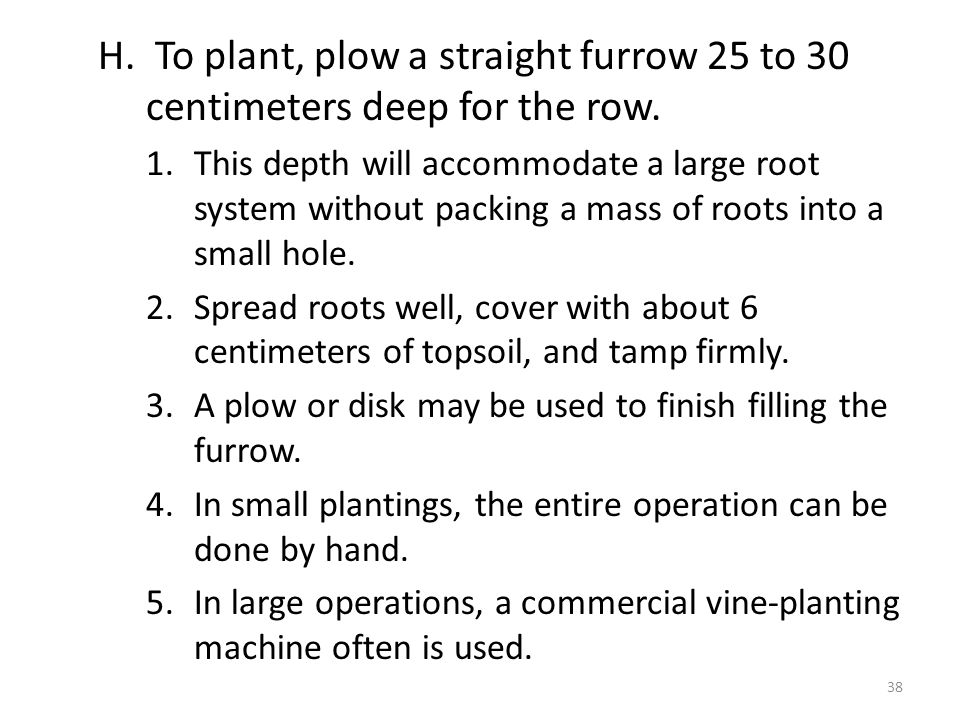 H. To plant, plow a straight furrow 25 to 30 centimeters deep for the row.