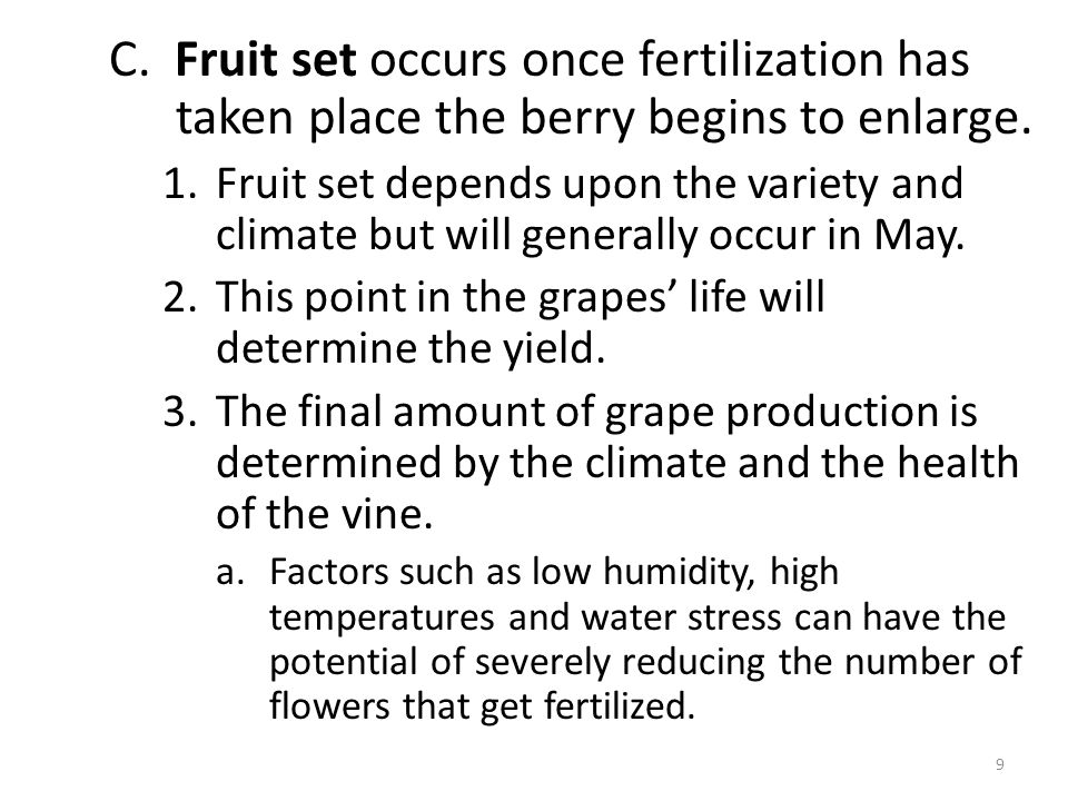 C. Fruit set occurs once fertilization has taken place the berry begins to enlarge. 1.Fruit set depends upon the variety and climate but will generall