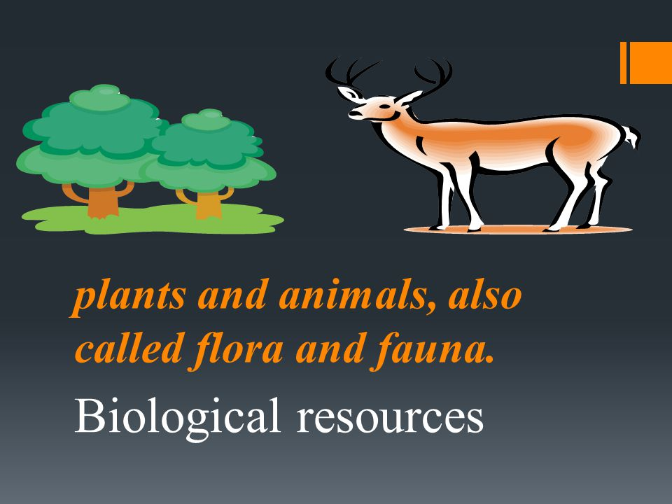 plants and animals, also called flora and fauna. Biological resources