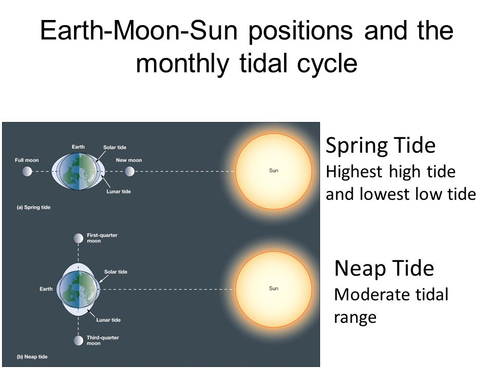 Earth-Moon-Sun positions and the monthly tidal cycle Spring Tide Highest high tide and lowest low tide Neap Tide Moderate tidal range