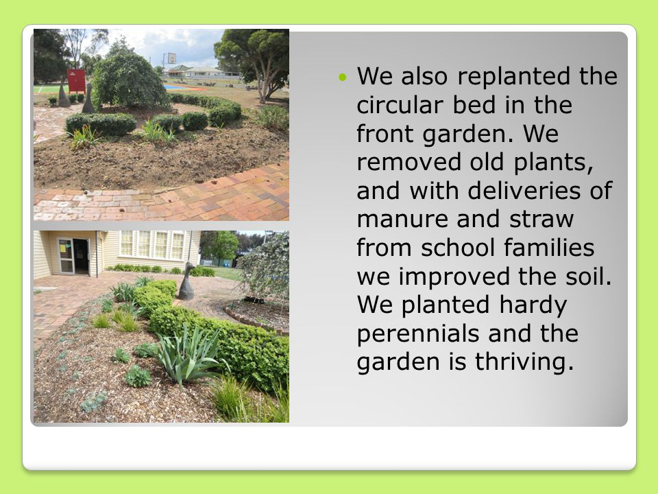 We also replanted the circular bed in the front garden.