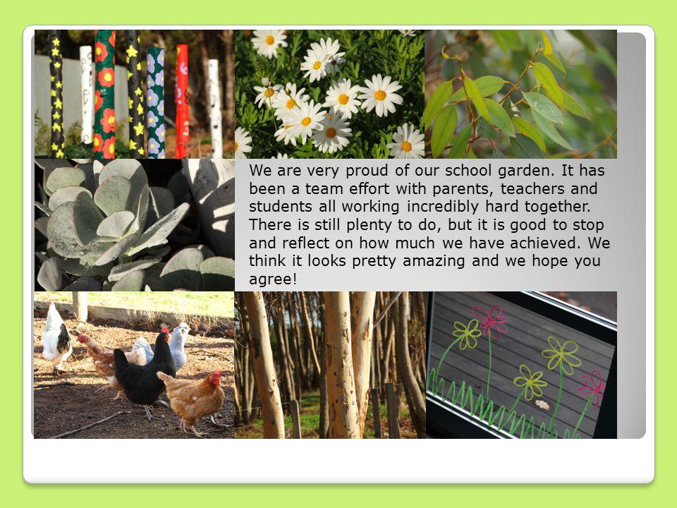 We are very proud of our school garden.