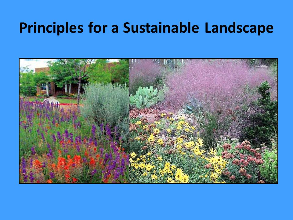 Water-Efficient Landscaping is a Major Component of Sustainable Landscaping which: meets the needs of today's population without diminishing the ability of future populations to meet their needs.