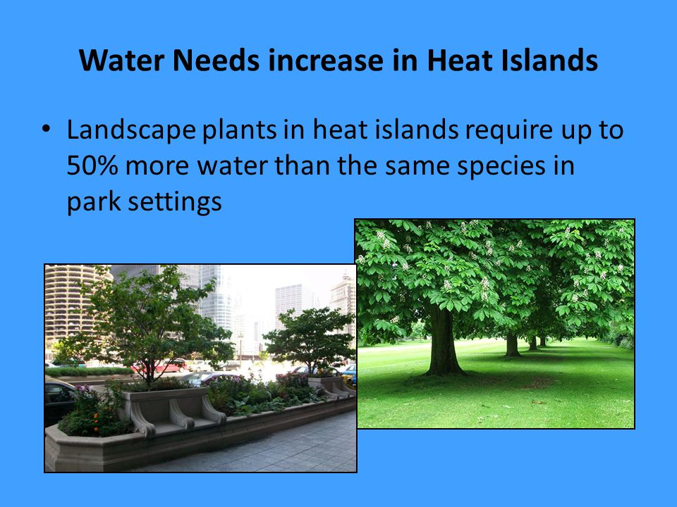 Water Needs increase in Heat Islands Landscape plants in heat islands require up to 50% more water than the same species in park settings
