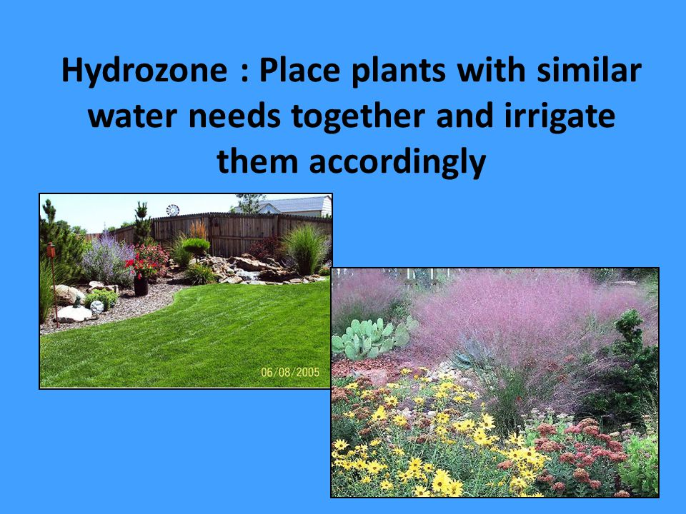 Hydrozone : Place plants with similar water needs together and irrigate them accordingly