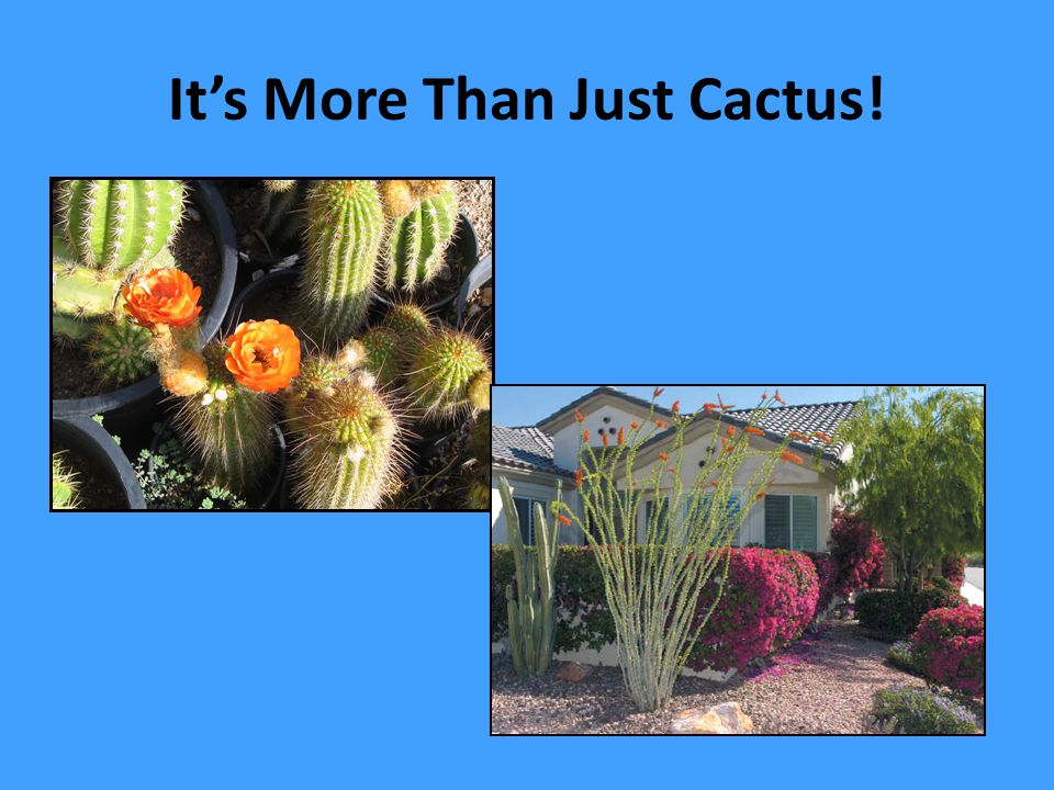 It's More Than Just Cactus!