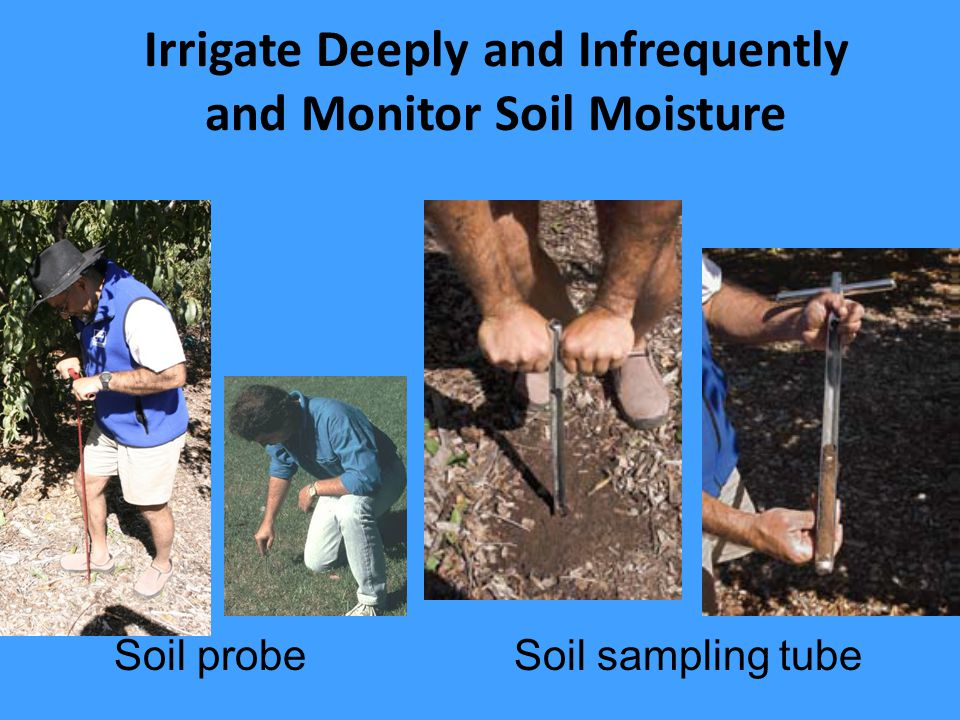 Irrigate Deeply and Infrequently and Monitor Soil Moisture Soil sampling tubeSoil probe