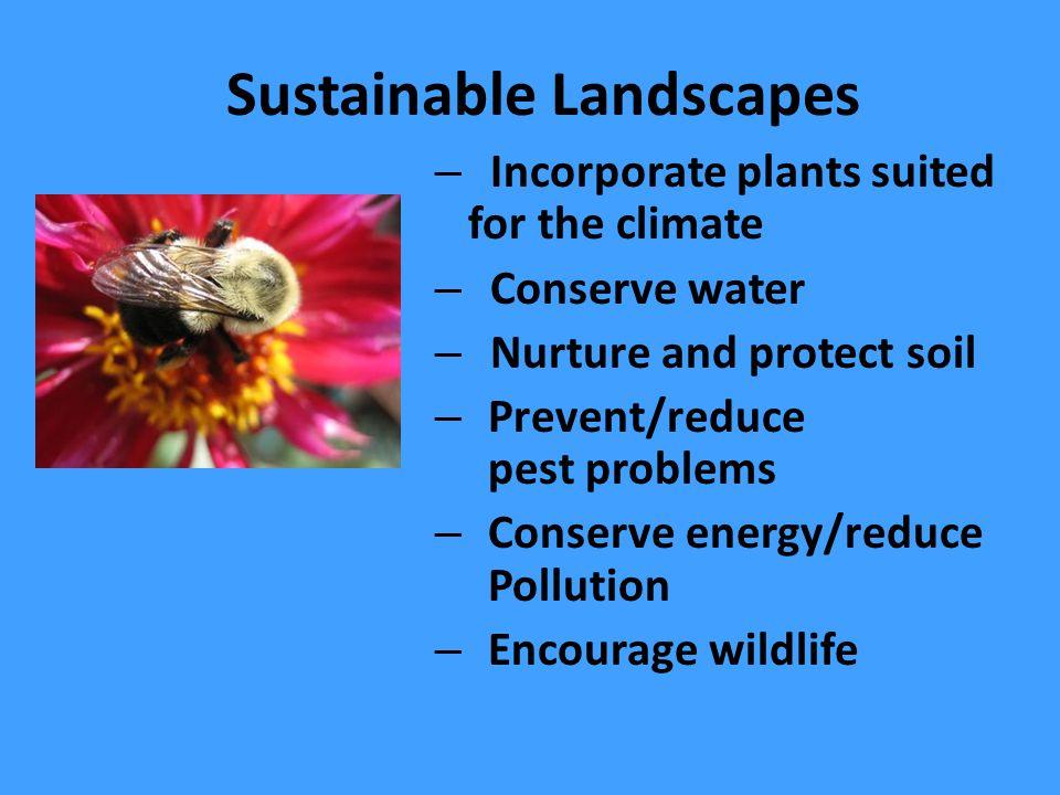 Warm-Season Lawns (Bermuda) Use Less Water than Cool-season Lawns (Tall Fescue) Lawn Watering Guide for California http://ucanr.org/freepubs/docs/8044.pdf