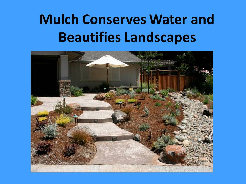 Mulch Conserves Water and Beautifies Landscapes
