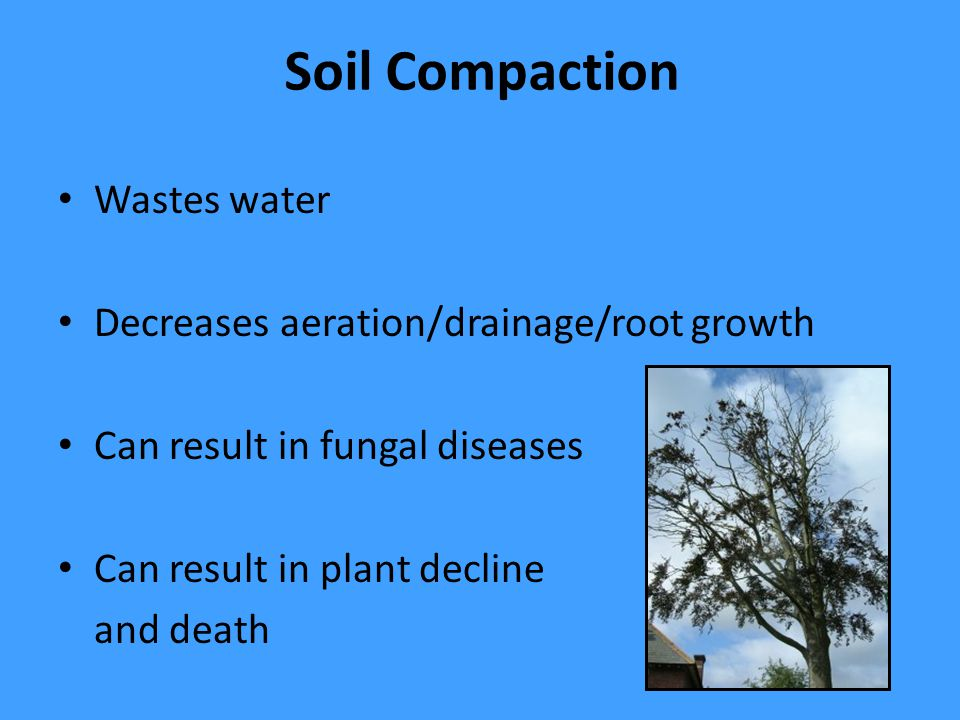 Soil Compaction Wastes water Decreases aeration/drainage/root growth Can result in fungal diseases Can result in plant decline and death