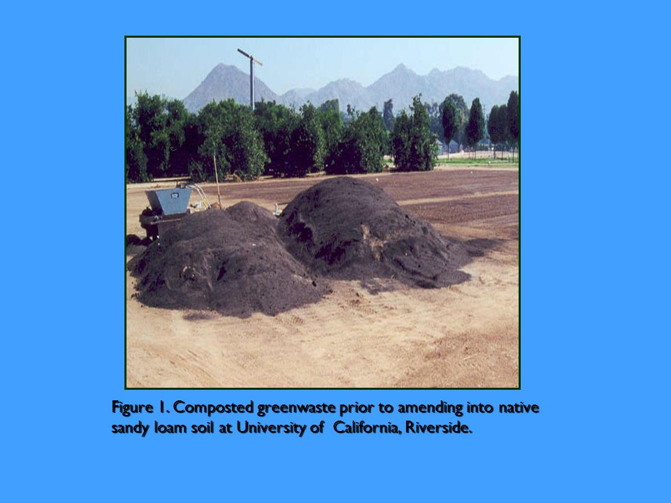Figure 1. Composted greenwaste prior to amending into native sandy loam soil at University of California, Riverside.