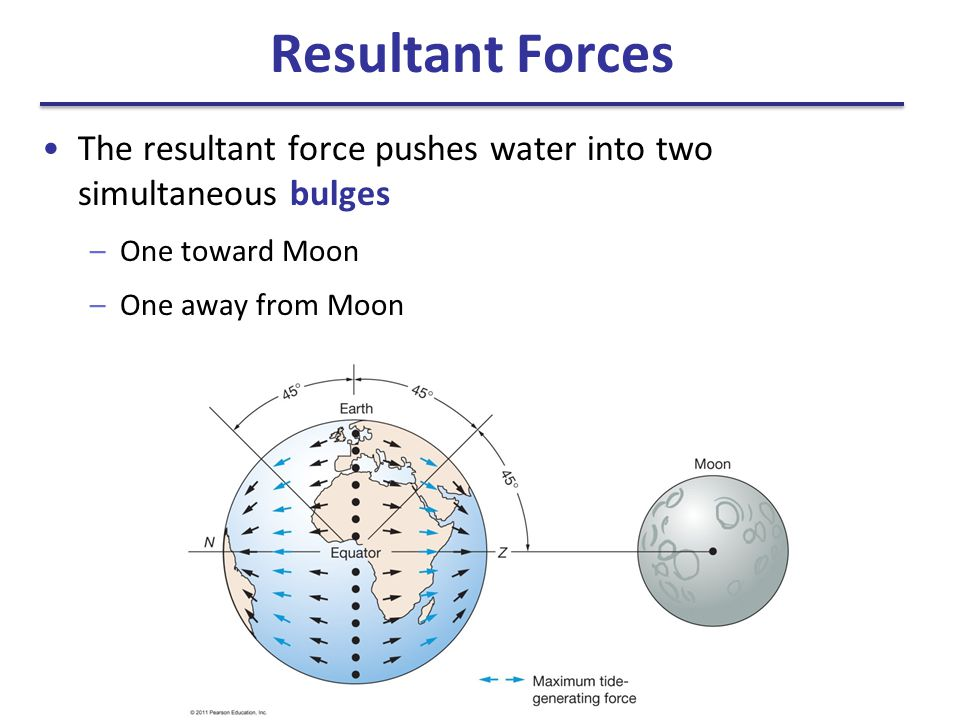 Resultant Forces The resultant force pushes water into two simultaneous bulges –One toward Moon –One away from Moon
