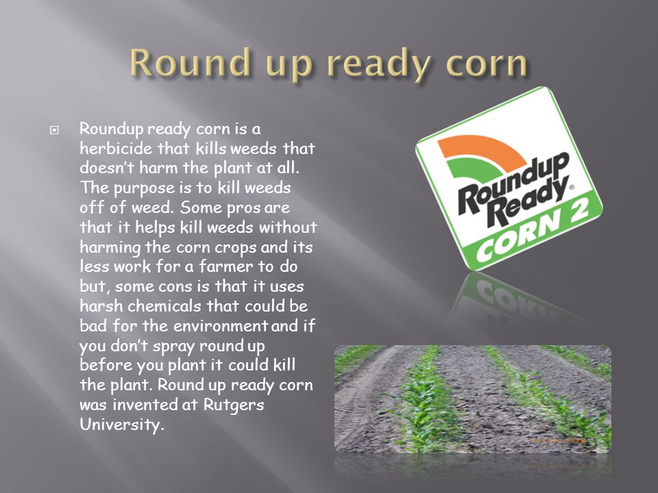  Roundup ready corn is a herbicide that kills weeds that doesn't harm the plant at all. The purpose is to kill weeds off of weed. Some pros are that