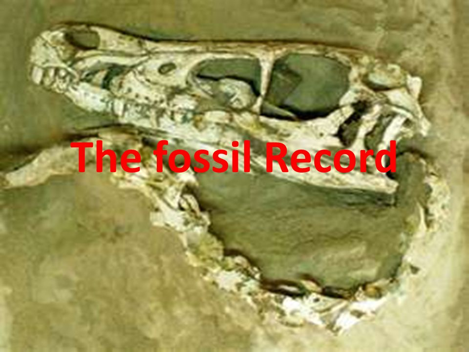Fossil Record Scientists look for similarities between living organisms and fossils.
