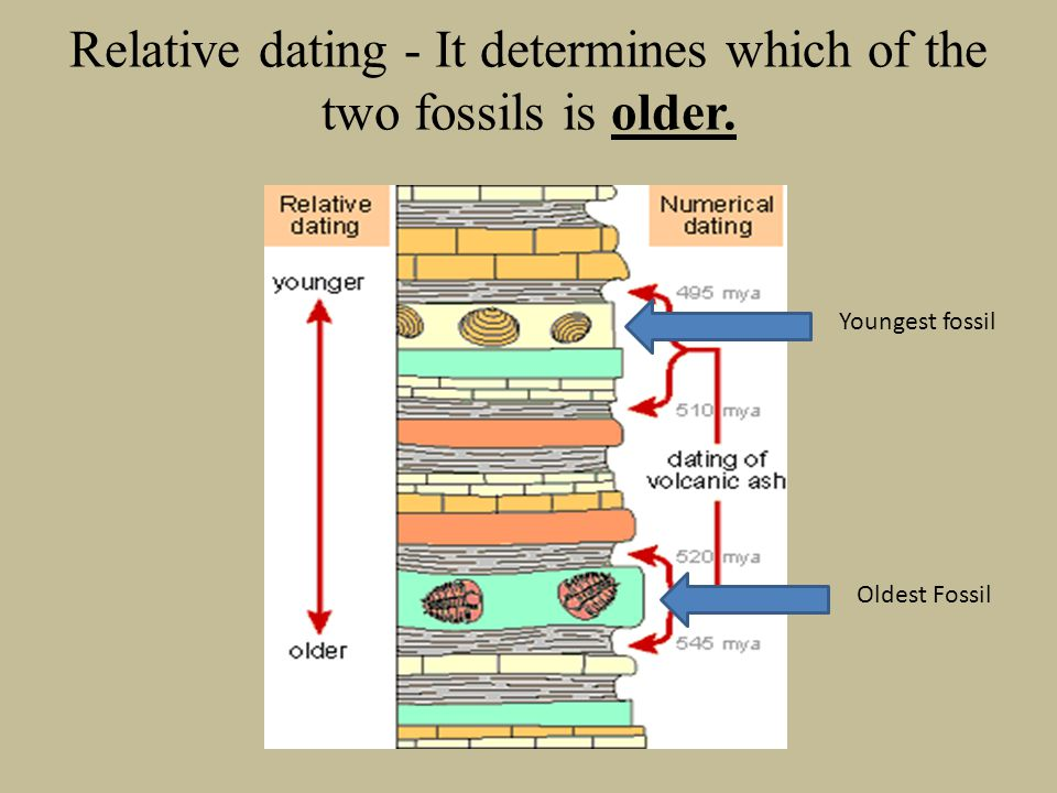 Relative dating - It determines which of the two fossils is older. Youngest fossil Oldest Fossil