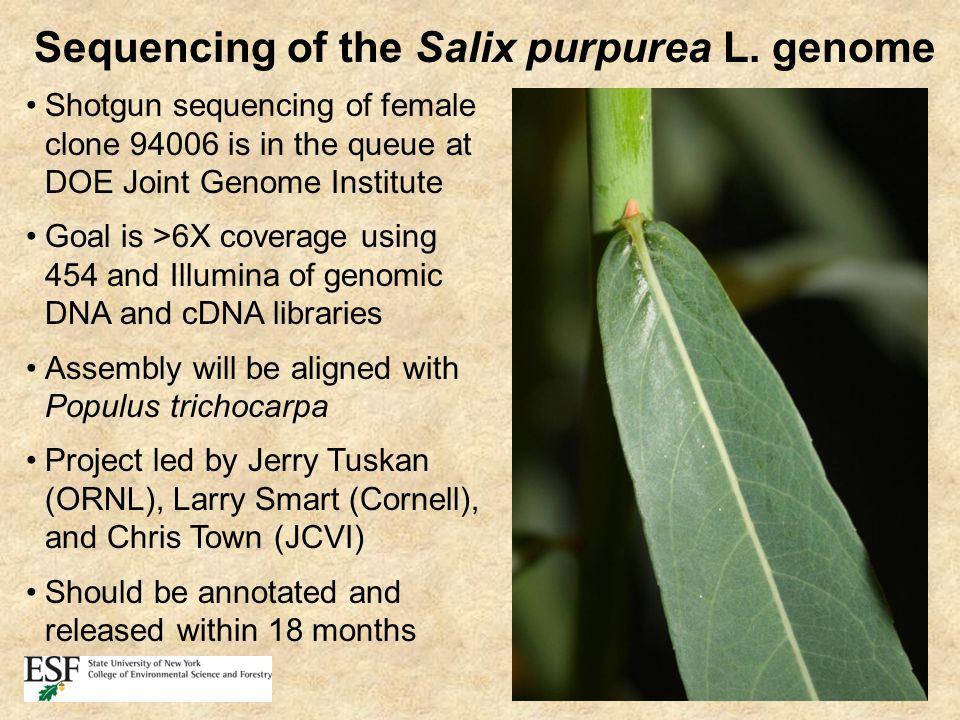 Sequencing of the Salix purpurea L.