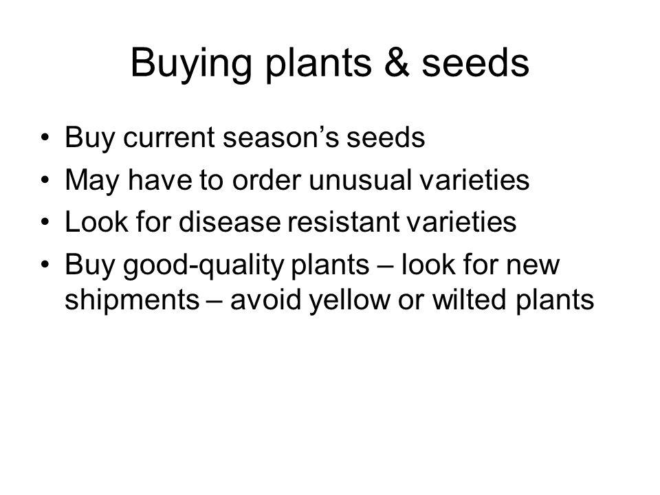 Buying plants & seeds Buy current season's seeds May have to order unusual varieties Look for disease resistant varieties Buy good-quality plants – lo