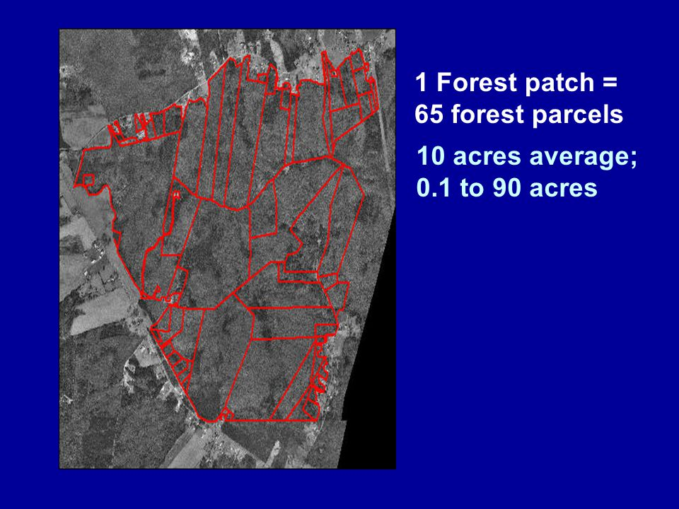 1 Forest patch = 65 forest parcels 10 acres average; 0.1 to 90 acres