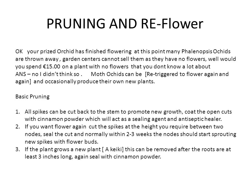 PRUNING AND RE-Flower OK your prized Orchid has finished flowering at this point many Phalenopsis Ochids are thrown away, garden centers cannot sell them as they have no flowers, well would you spend €15.00 on a plant with no flowers that you dont know a lot about ANS – no I didn't think so.