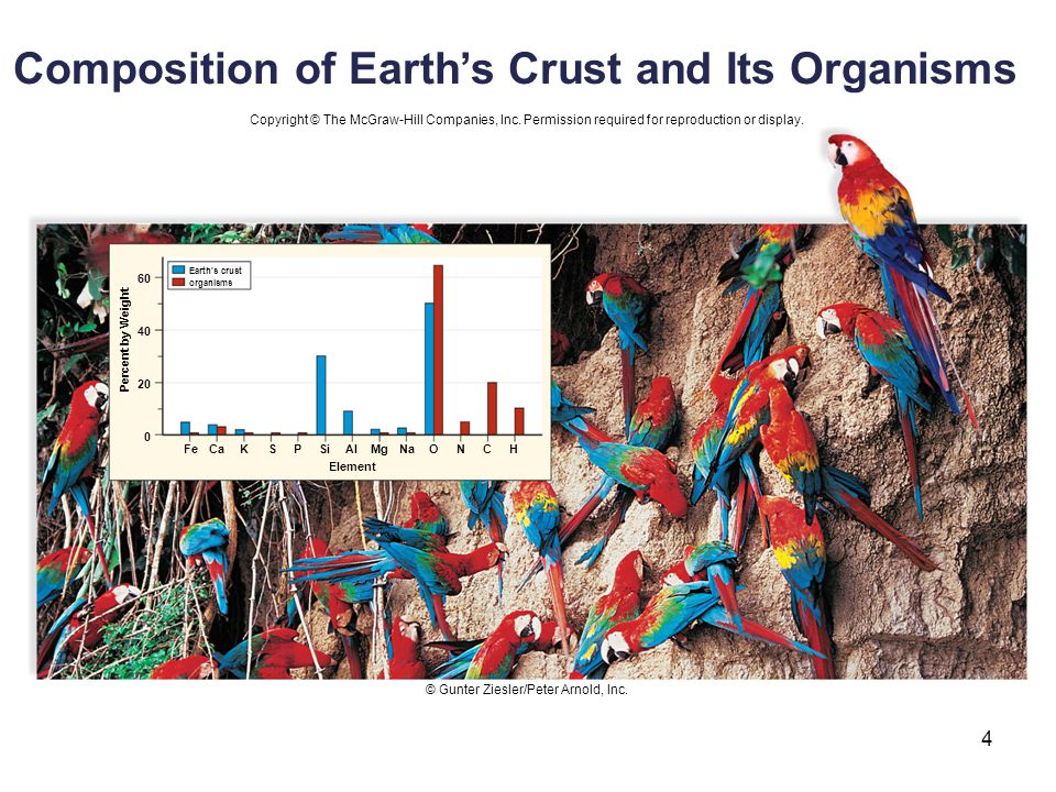 4 60 40 20 0 FeCaKSPSiAlMgNaONCH Earth's crust organisms Element Percent by Weight Copyright © The McGraw-Hill Companies, Inc. Permission required for