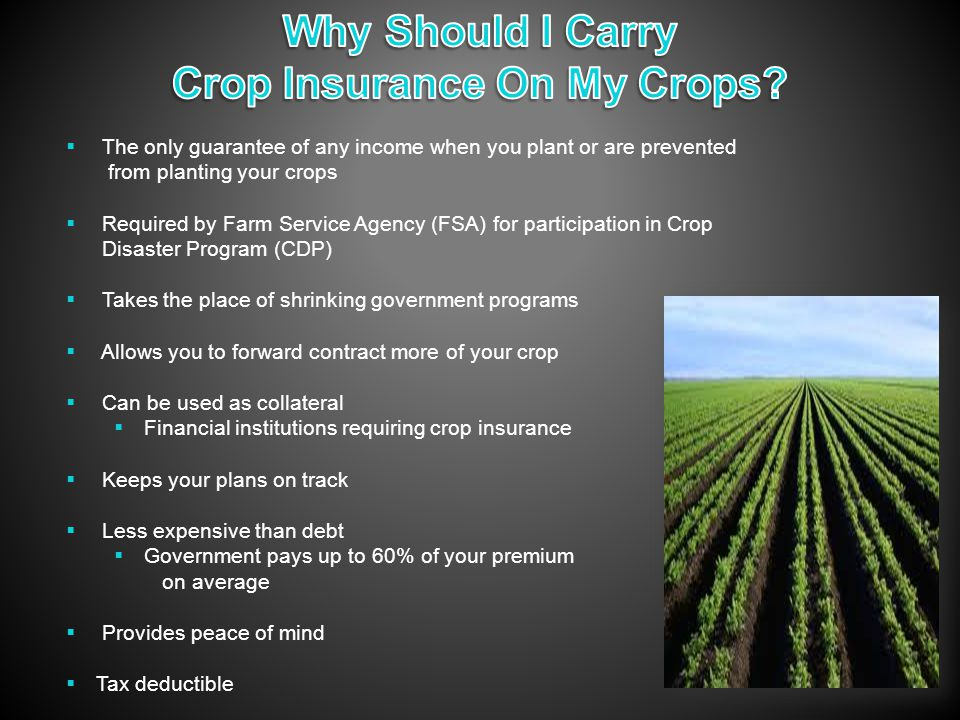  The only guarantee of any income when you plant or are prevented from planting your crops  Required by Farm Service Agency (FSA) for participation in Crop Disaster Program (CDP)  Takes the place of shrinking government programs  Allows you to forward contract more of your crop  Can be used as collateral  Financial institutions requiring crop insurance  Keeps your plans on track  Less expensive than debt  Government pays up to 60% of your premium on average  Provides peace of mind  Tax deductible