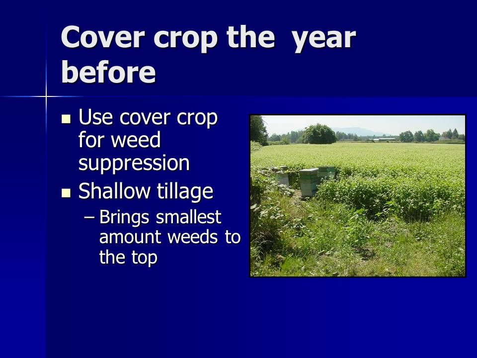 Cover crop the year before Use cover crop for weed suppression Use cover crop for weed suppression Shallow tillage Shallow tillage –Brings smallest amount weeds to the top