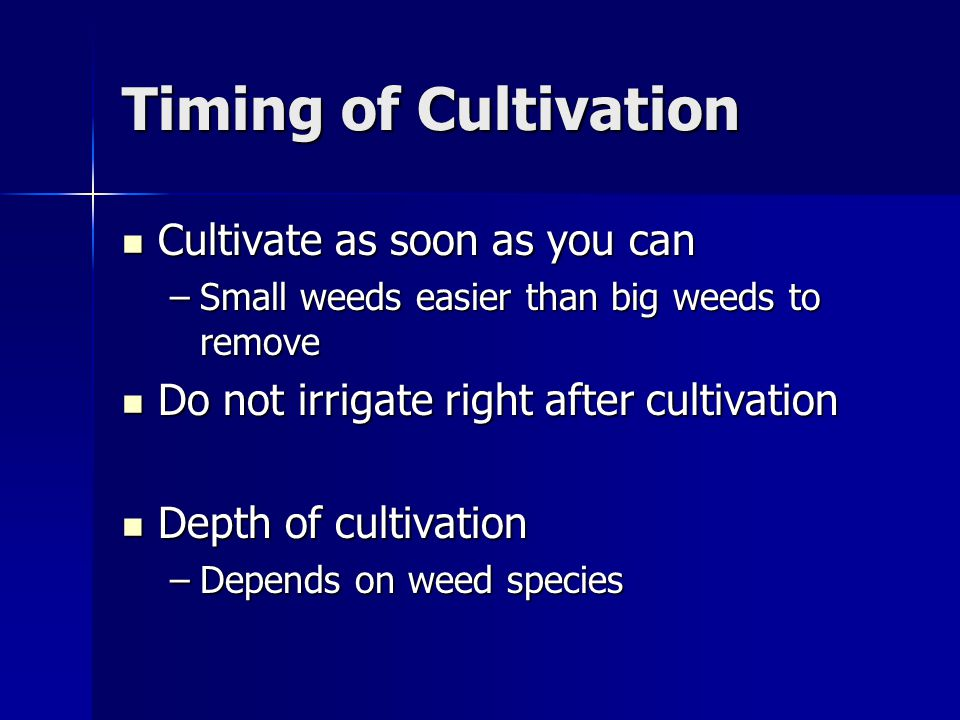 Timing of Cultivation Cultivate as soon as you can Cultivate as soon as you can –Small weeds easier than big weeds to remove Do not irrigate right after cultivation Do not irrigate right after cultivation Depth of cultivation Depth of cultivation –Depends on weed species