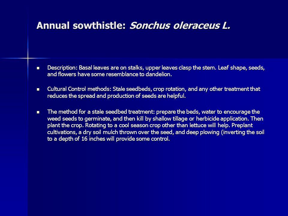 Annual sowthistle: Sonchus oleraceus L. Annual sowthistle: Sonchus oleraceus L.