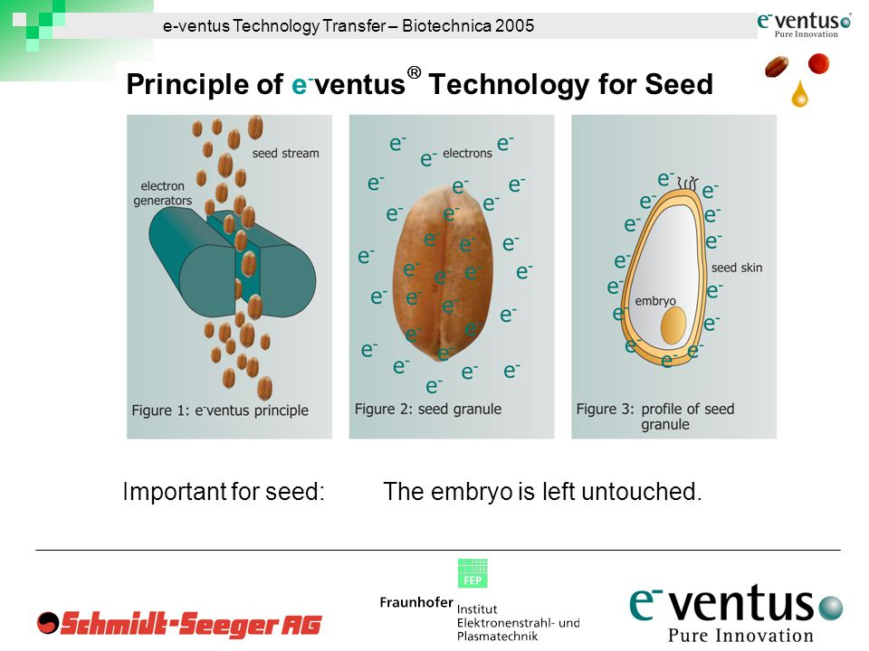 e-ventus Technology Transfer – Biotechnica 2005 Important for seed:The embryo is left untouched.