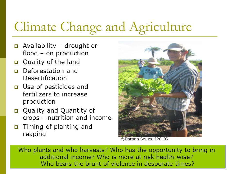 Climate Change and Agriculture  Availability – drought or flood – on production  Quality of the land  Deforestation and Desertification  Use of pesticides and fertilizers to increase production  Quality and Quantity of crops – nutrition and income  Timing of planting and reaping Who plants and who harvests.