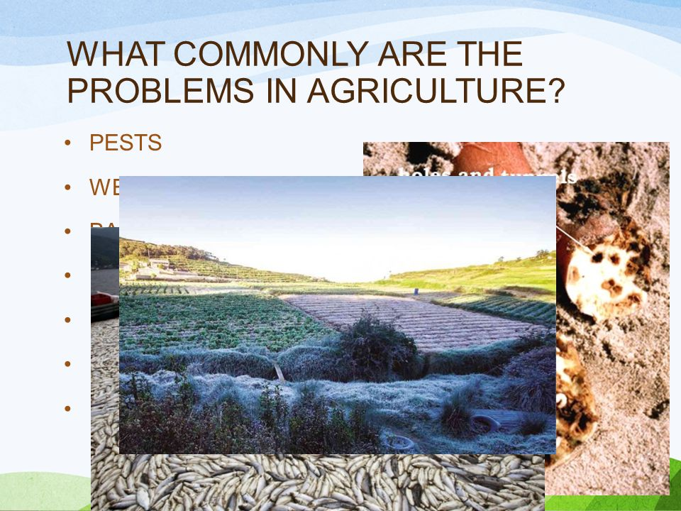 WHAT COMMONLY ARE THE PROBLEMS IN AGRICULTURE.