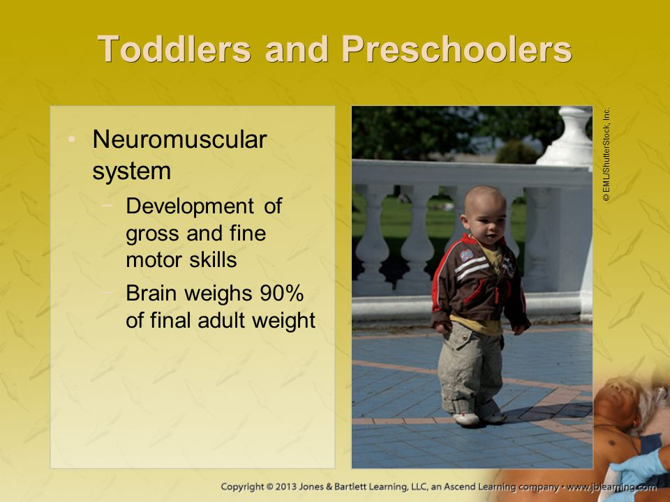 Toddlers and Preschoolers Neuromuscular system −Development of gross and fine motor skills −Brain weighs 90% of final adult weight © EML/ShutterStock,